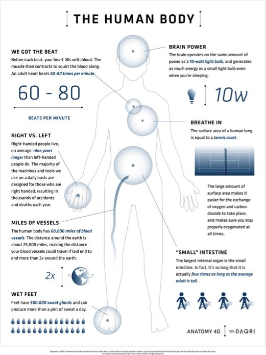 3d-insan-anatomisi
