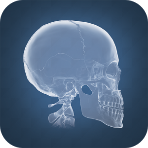 anatomi-4d-nedir